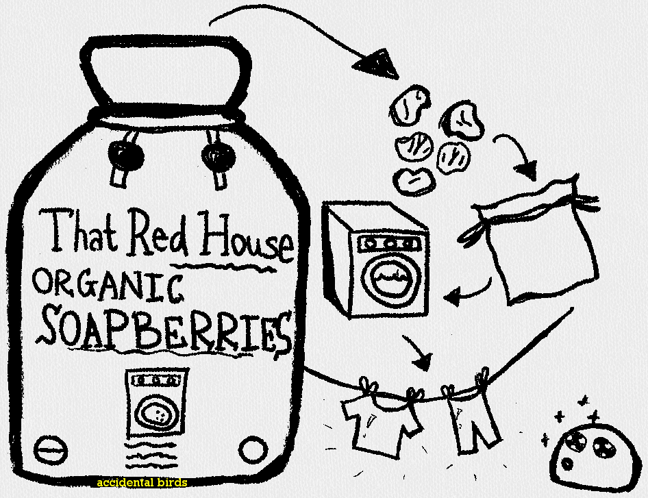 soapberries2a
